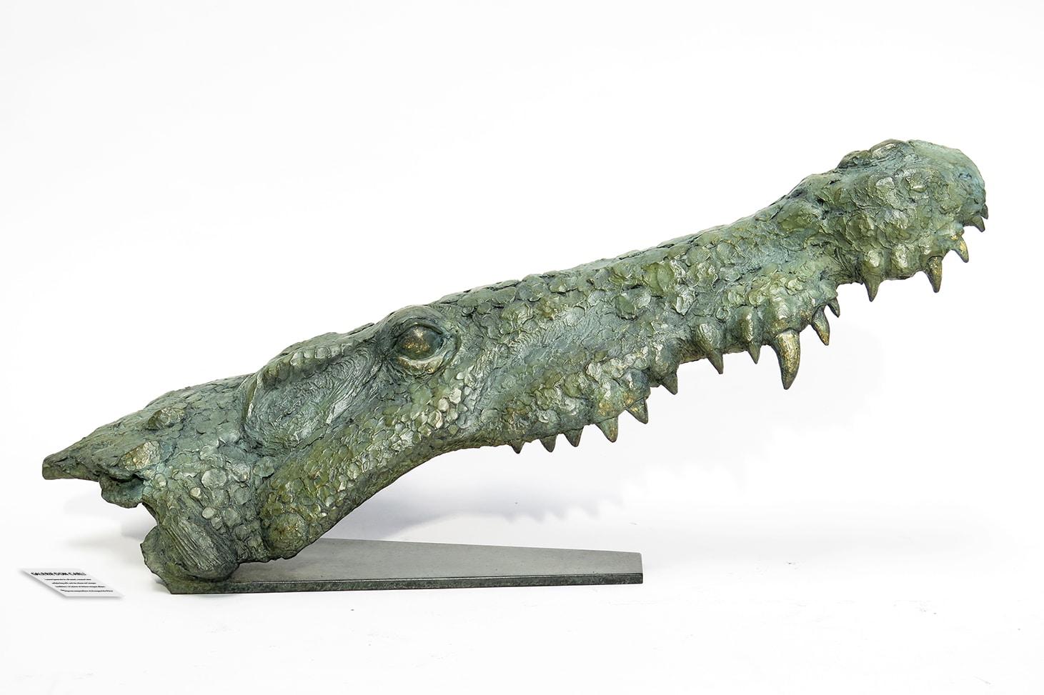 Crocodylus Niloticus Pierre Jean Chabert Don Carli